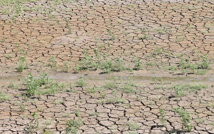 33 municipios cerraron el año pasado con algún tipo de sequía: Conagua