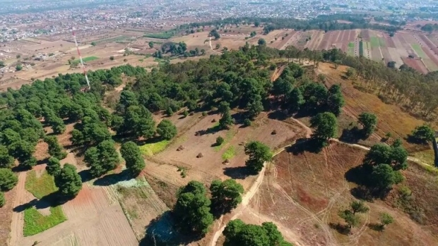 Talaron 400 árboles para terminar con plaga en el Cerro Zapotecas
