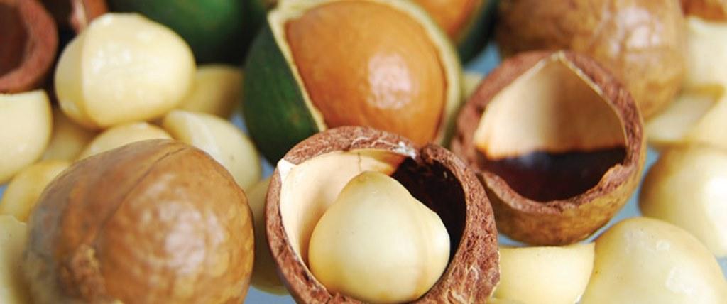 Investigadores de Ecosur Trabajan para Prevenir Plaga en Cultivos de Nuez de Macadamia en Chiapas.