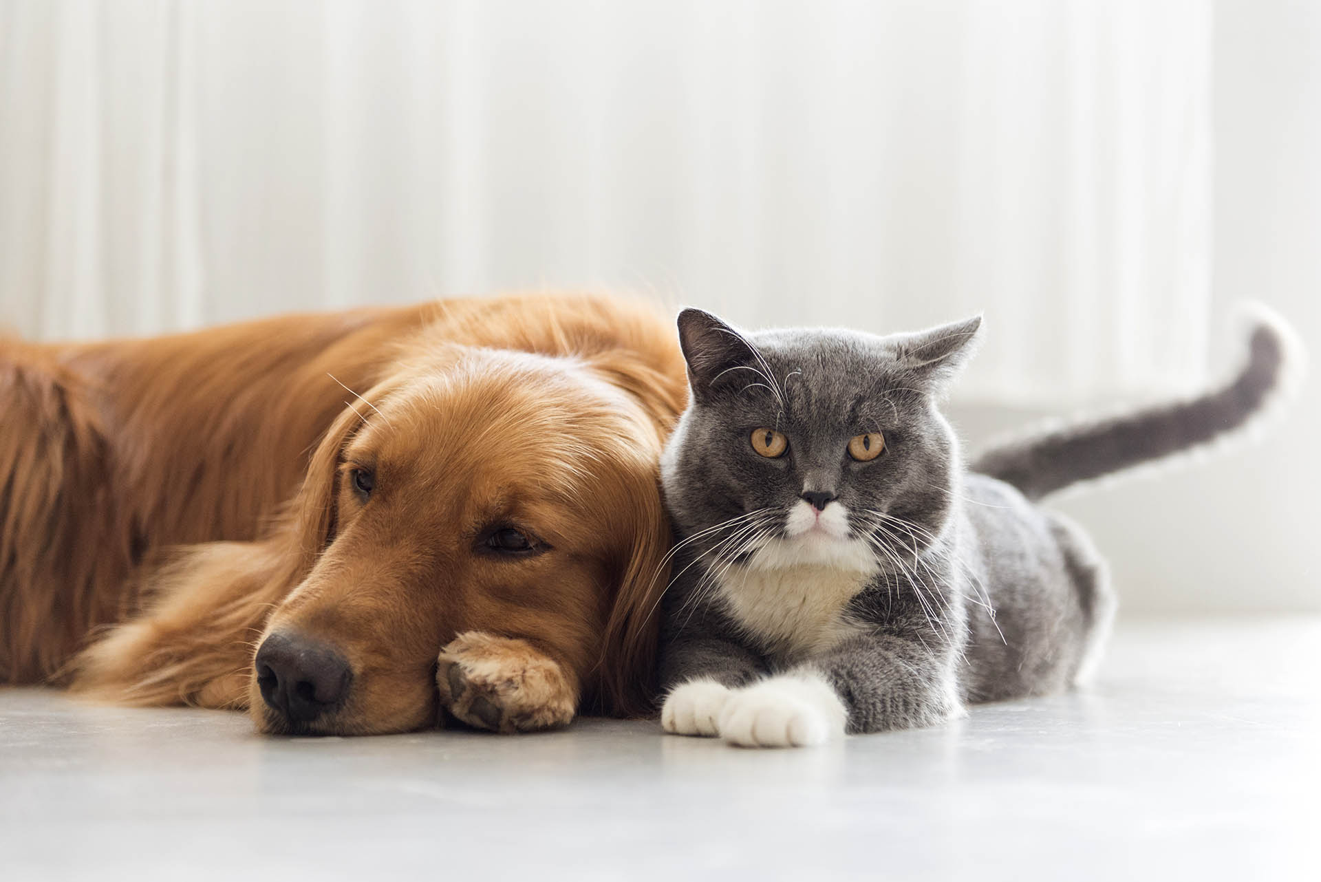 Enfermedades dermatológicas en mascotas, problema común en México