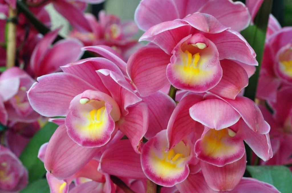 20 Especies de Orquídeas del Soconusco en Peligro de Extinción: Ecosur.