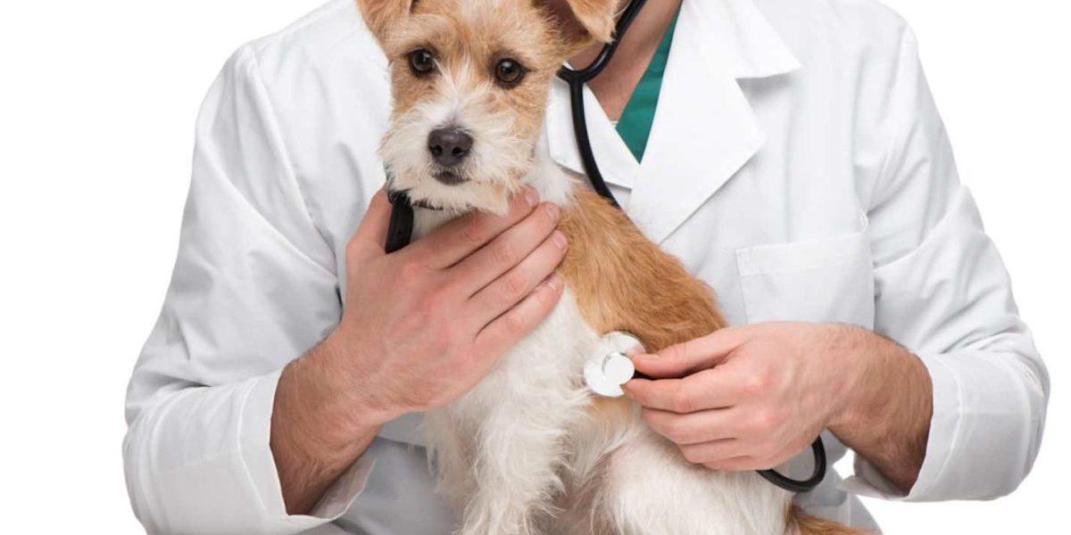 Médicos veterinarios son esenciales para asegurar el bienestar animal y la seguridad alimentaria durante contingencia