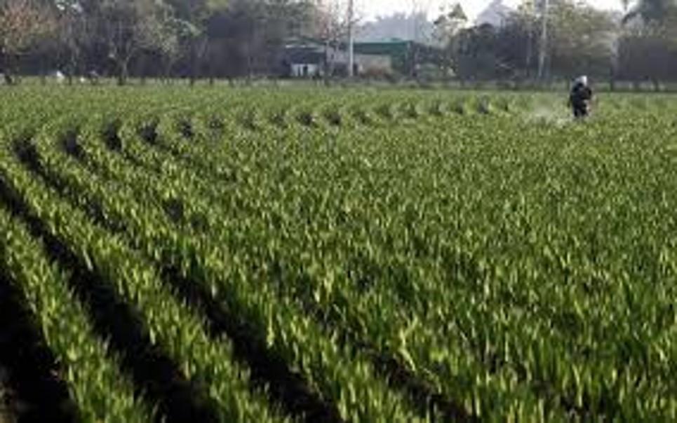 En la delegación de la Secretaría de Agricultura hay suspensión de actividades hasta el uno de agosto