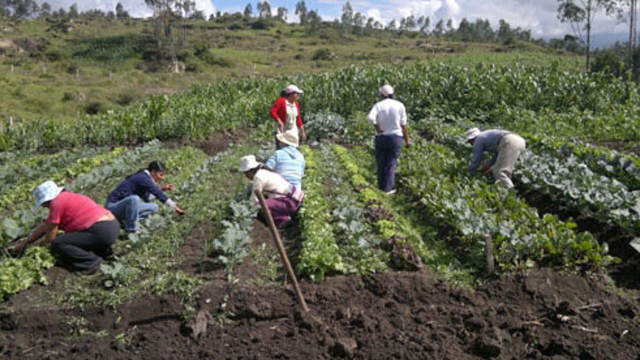 La agricultura urbana en pequeños espacios es una buena estrategia para producir alimentos, afirma académico