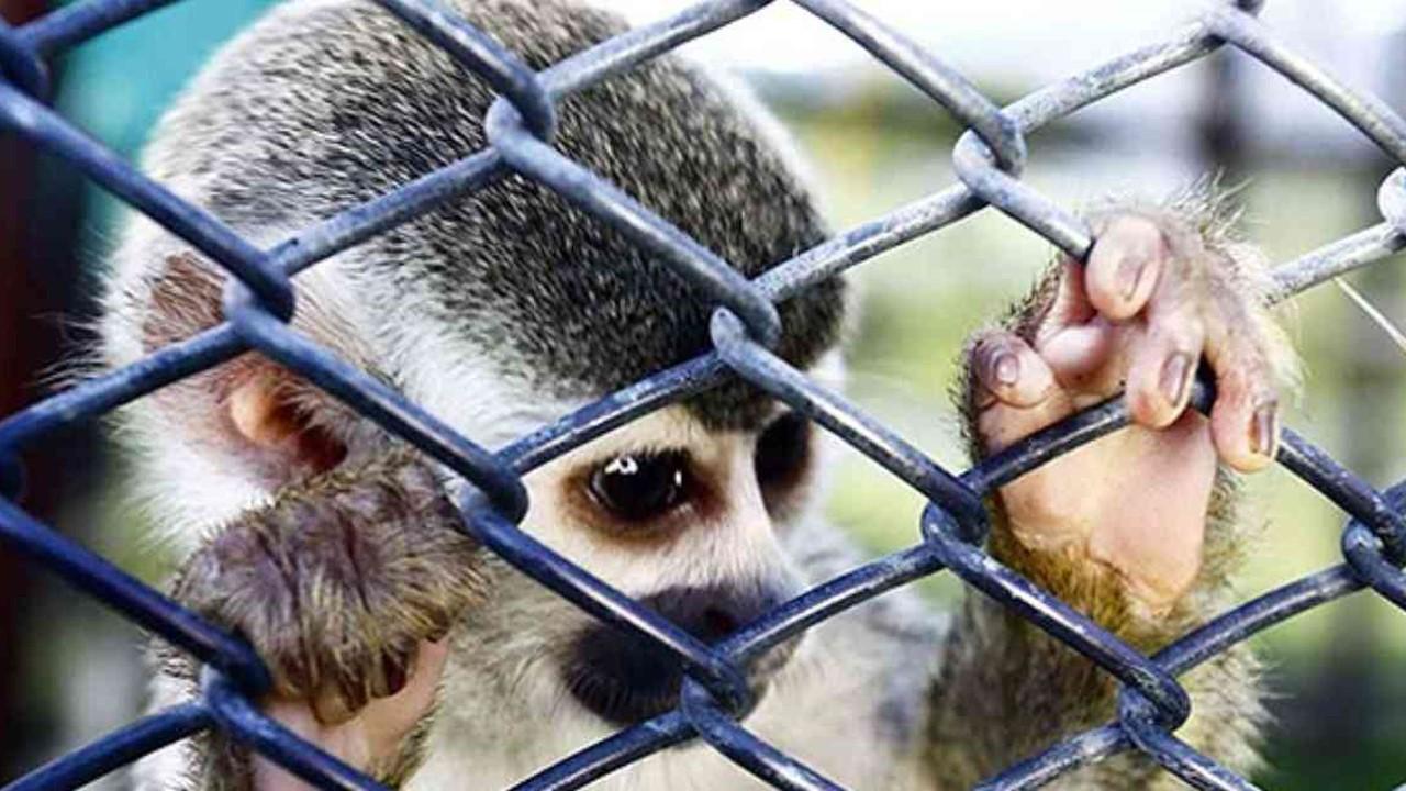 Para evitar más pandemias se necesita controlar el tráfico ilegal de fauna y flora silvestre