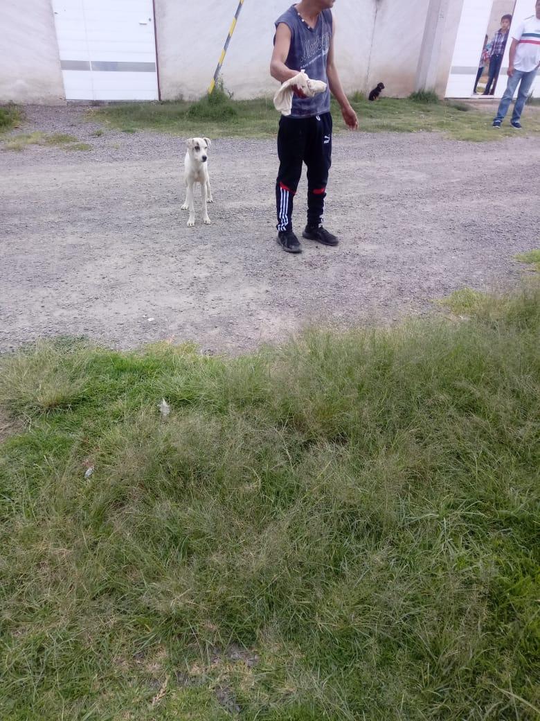 Jauría de perros tiene atemorizados a ciudadanos en Amozoc