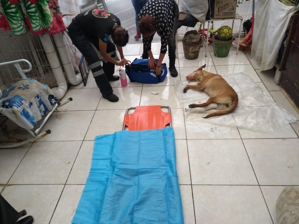 Cohetón destrozó una pata a una perrita en Bosques de San Sebastián