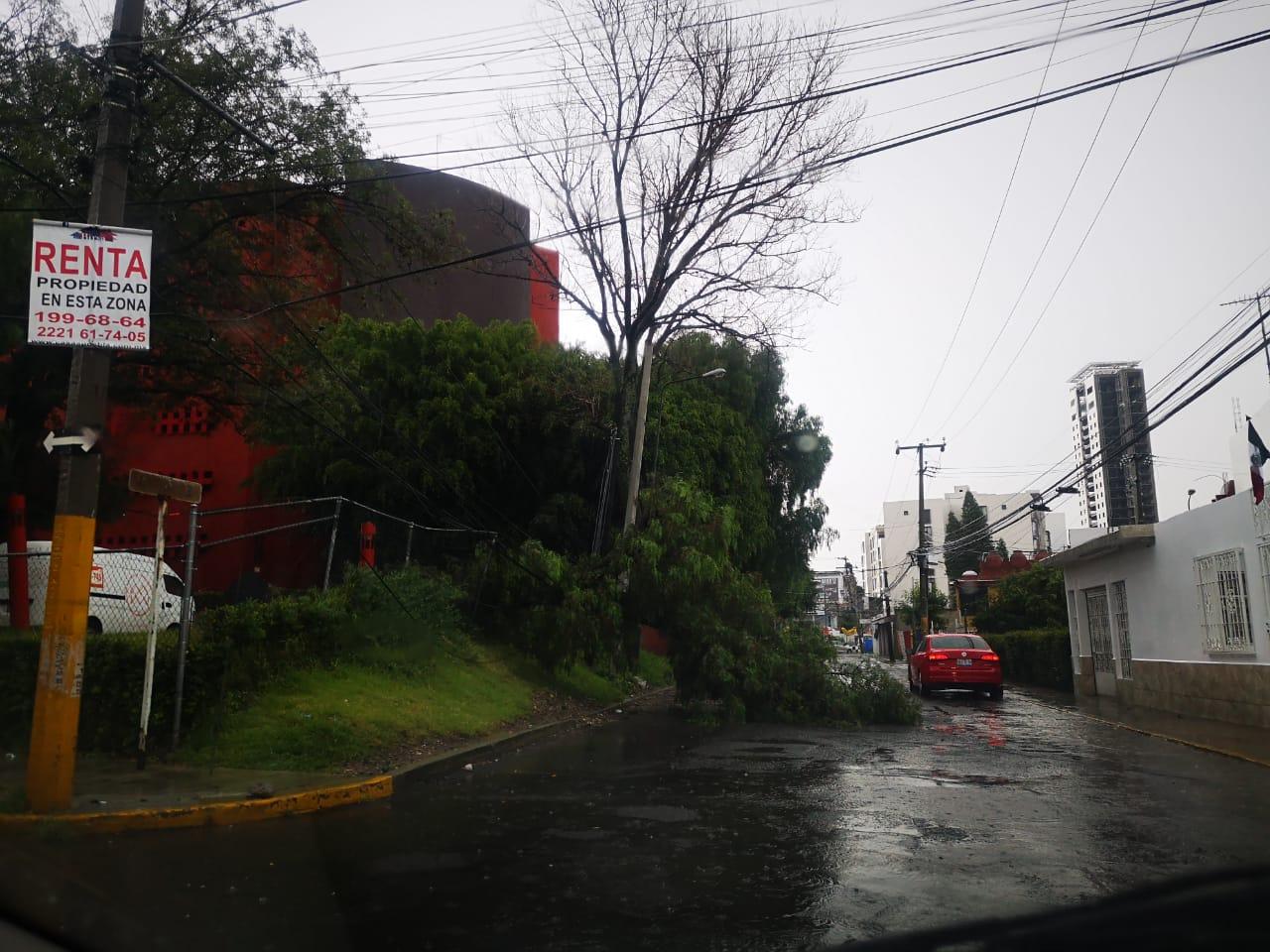 Tromba derrumba 2 árboles en la capital
