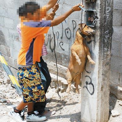 Diputados aprueban castigar de 1 a 8 años de prisión a quien maltrate animales en Puebla