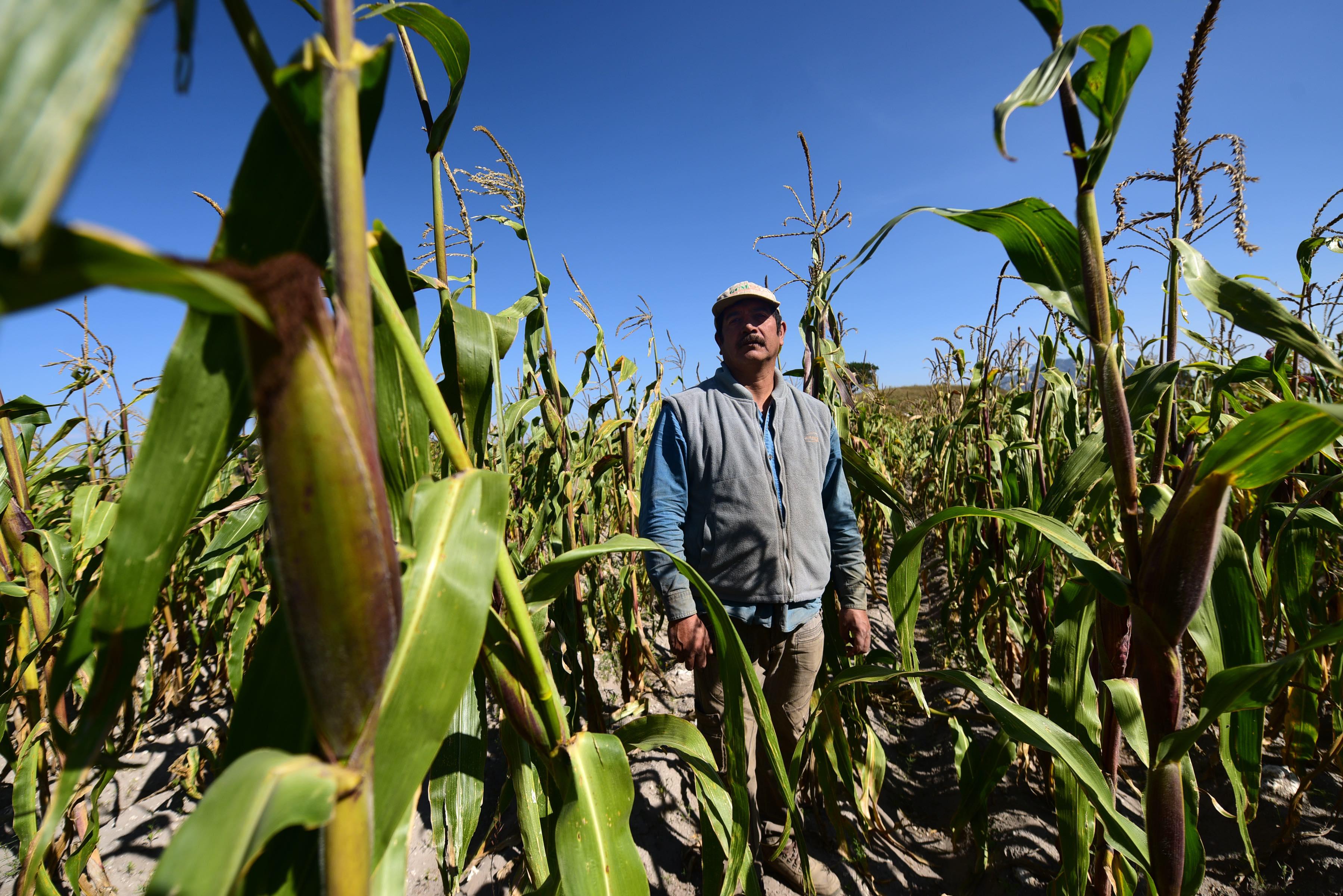 Más de 200 productores duplican productividad en maíz con apoyo de Granjas Carroll de México