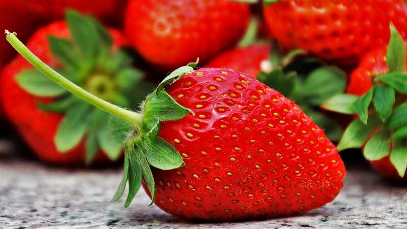 El INIFAP impulsa nuevas variedades de fresa en el país
