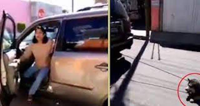Video desde Puebla: Una mujer arrastró a su perro, raza Husky, por las calles de Tehuacán