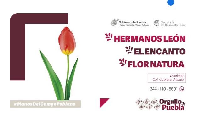 Apoyar a los floricultores poblanos este 14 de febrero, pide la secretaría de Desarrollo Rural