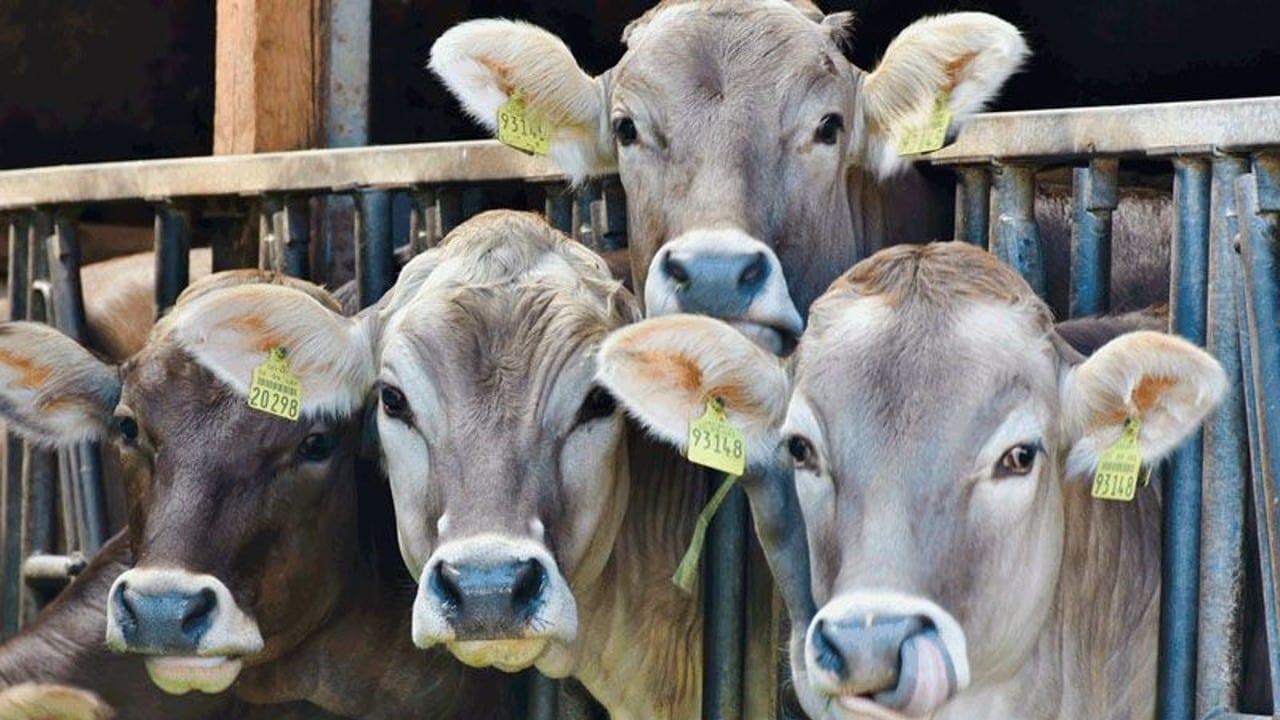 México, en el top ten de exportadores de carne a nivel mundial