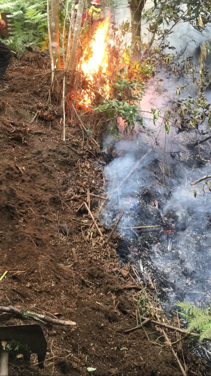 Video desde Puebla: Reportan incendio forestal sobre el camino a Puga en Huauchinango
