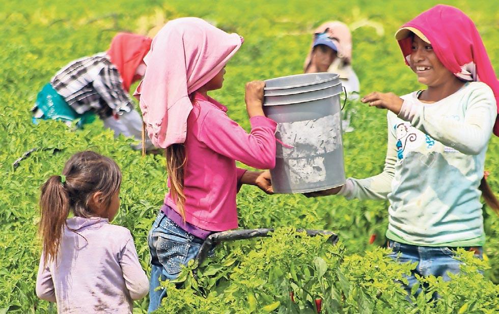 Menores jornaleros migrantes, con las peores condiciones educativas: INIDE