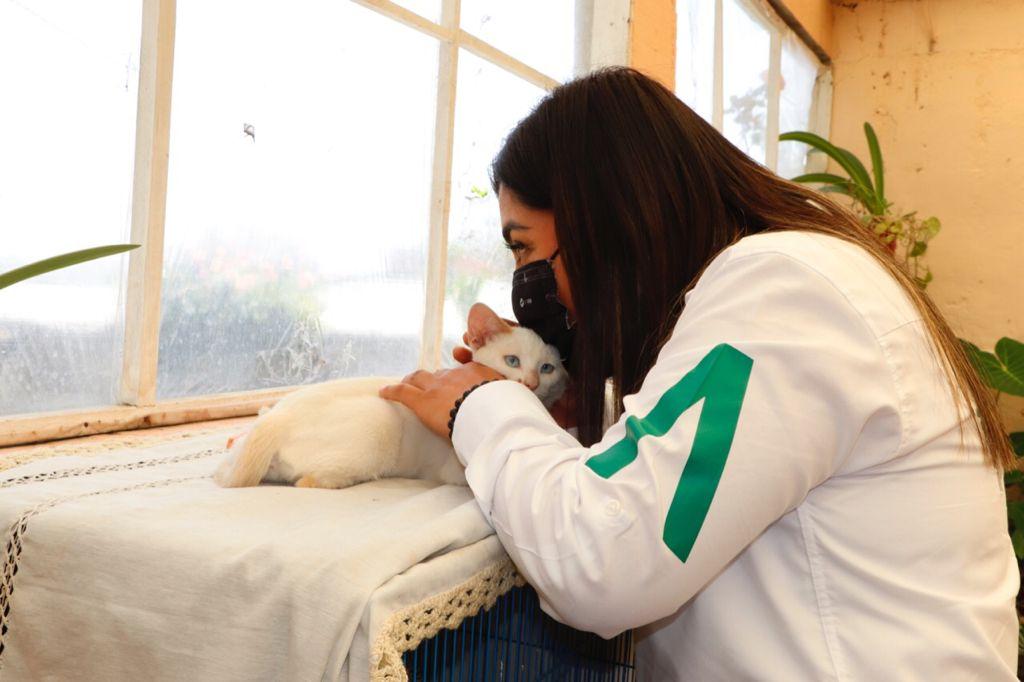 Aplicar la Ley de Bienestar Animal, compromiso de Anabel Alvarado