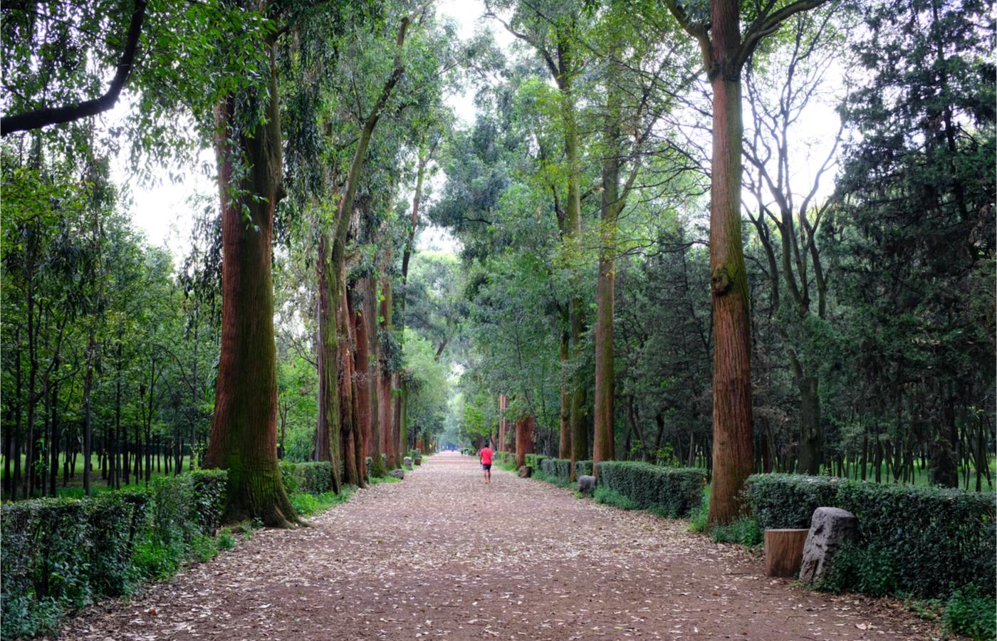 Esto cuesta vivir en las colonias de la CDMX con parques más emblemáticos