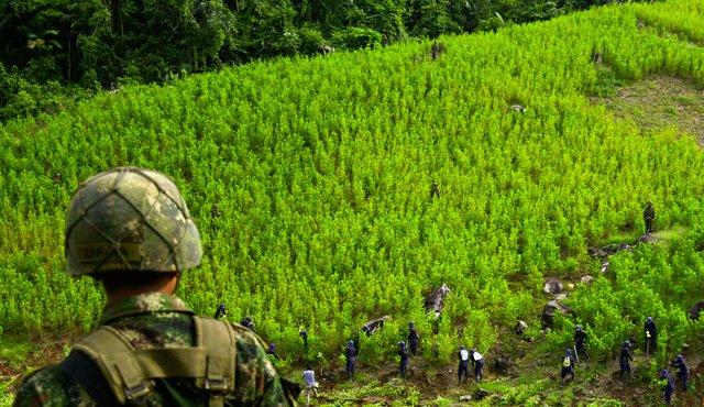 De 2017 a 2019, el aseguramiento de drogas ha registrado una tendencia decreciente, particularmente de marihuana y amapola