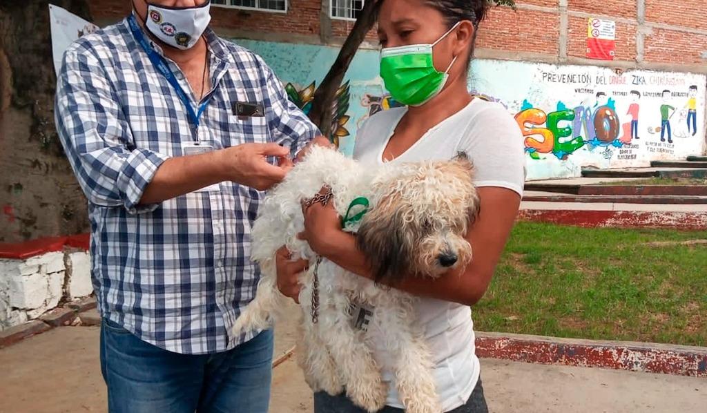 Autoridades sanitarias suministrarán 30 mil dosis de vacunas antirrábicas a perros y gatos