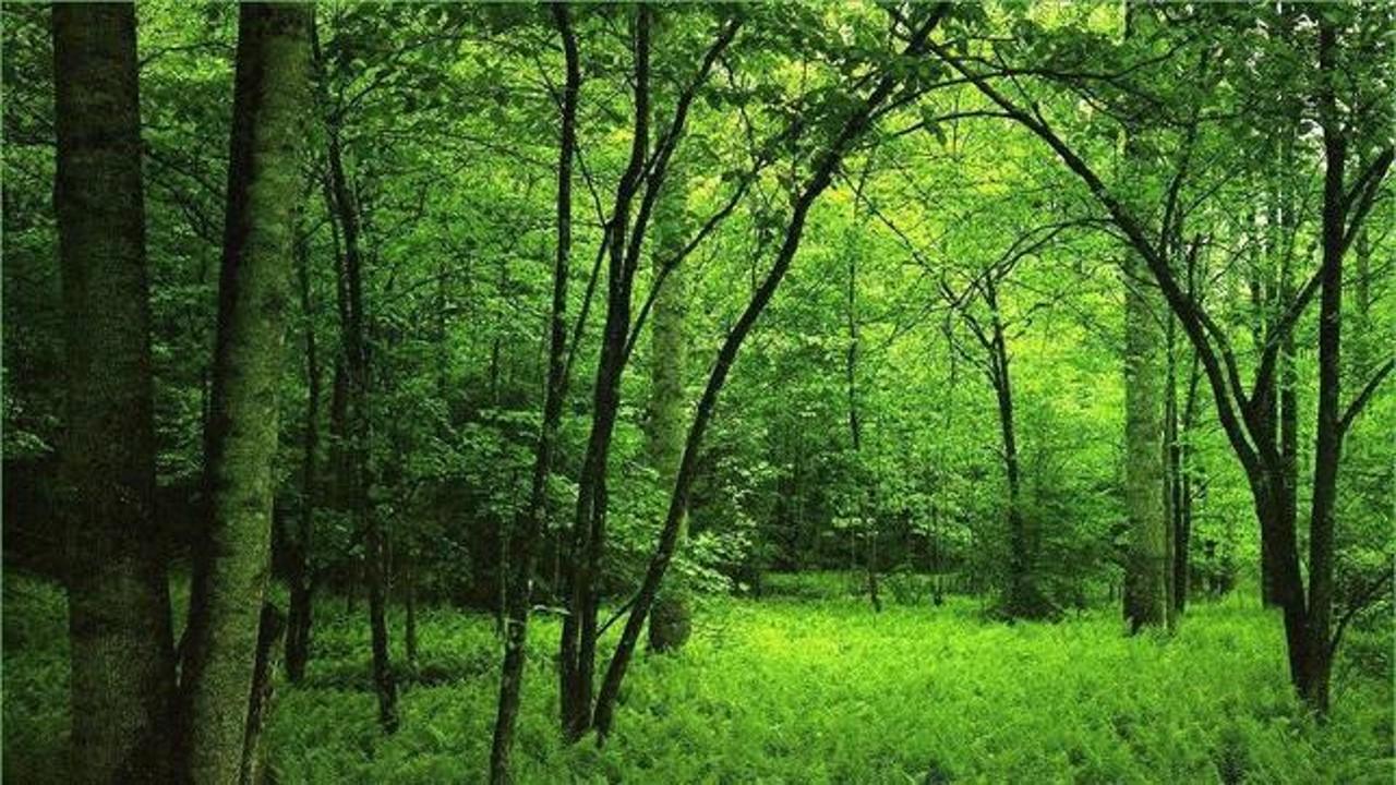 Pacto Verde Europeo: la Comisión propone una nueva estrategia para proteger y restaurar los bosques de la UE