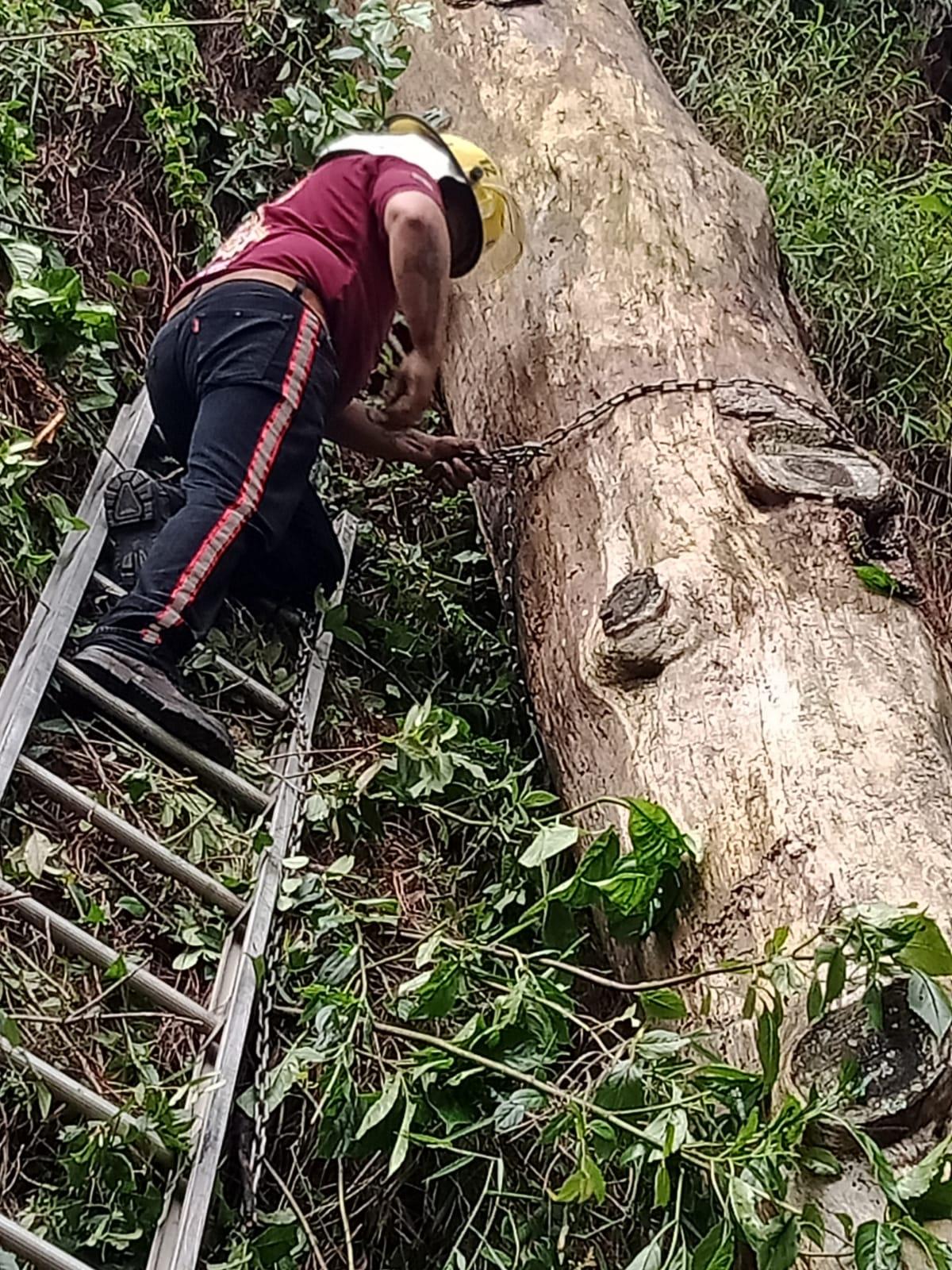Video desde Puebla: Deslaves y árboles y ramas caídas sobre la carretera federal México – Tuxpan