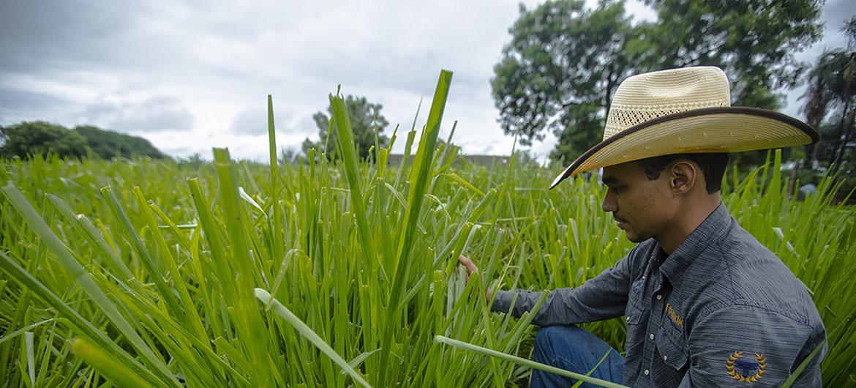 La pandemia de COVID-19 es una oportunidad de remodelar los sistemas agroalimentarios de América Latina